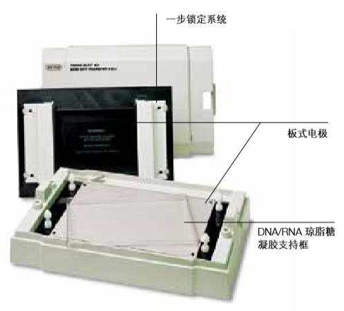 美国伯乐 双向电泳系统(转印系统)转印槽 / 半干转印槽